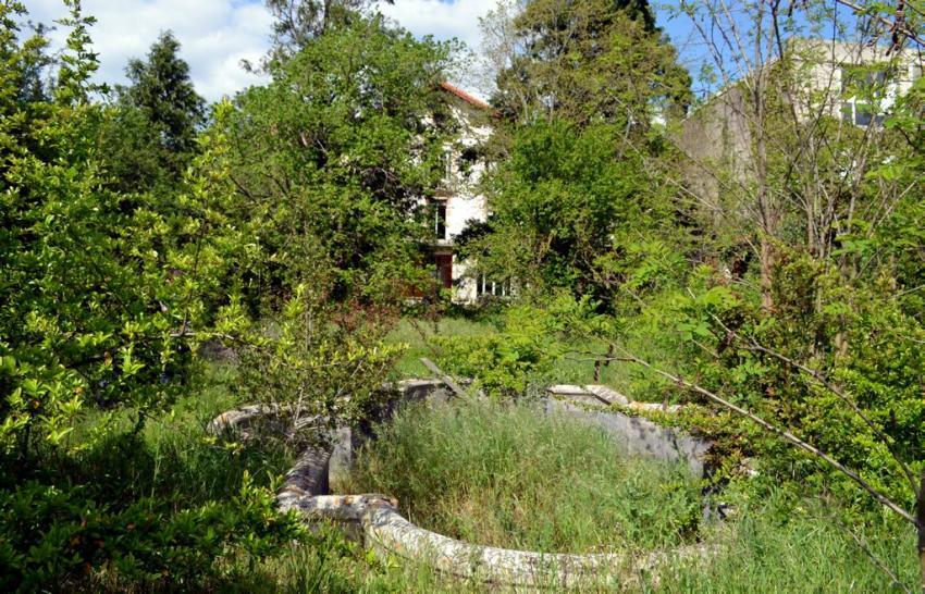 Jardin abandonné, comment le restaurer ?